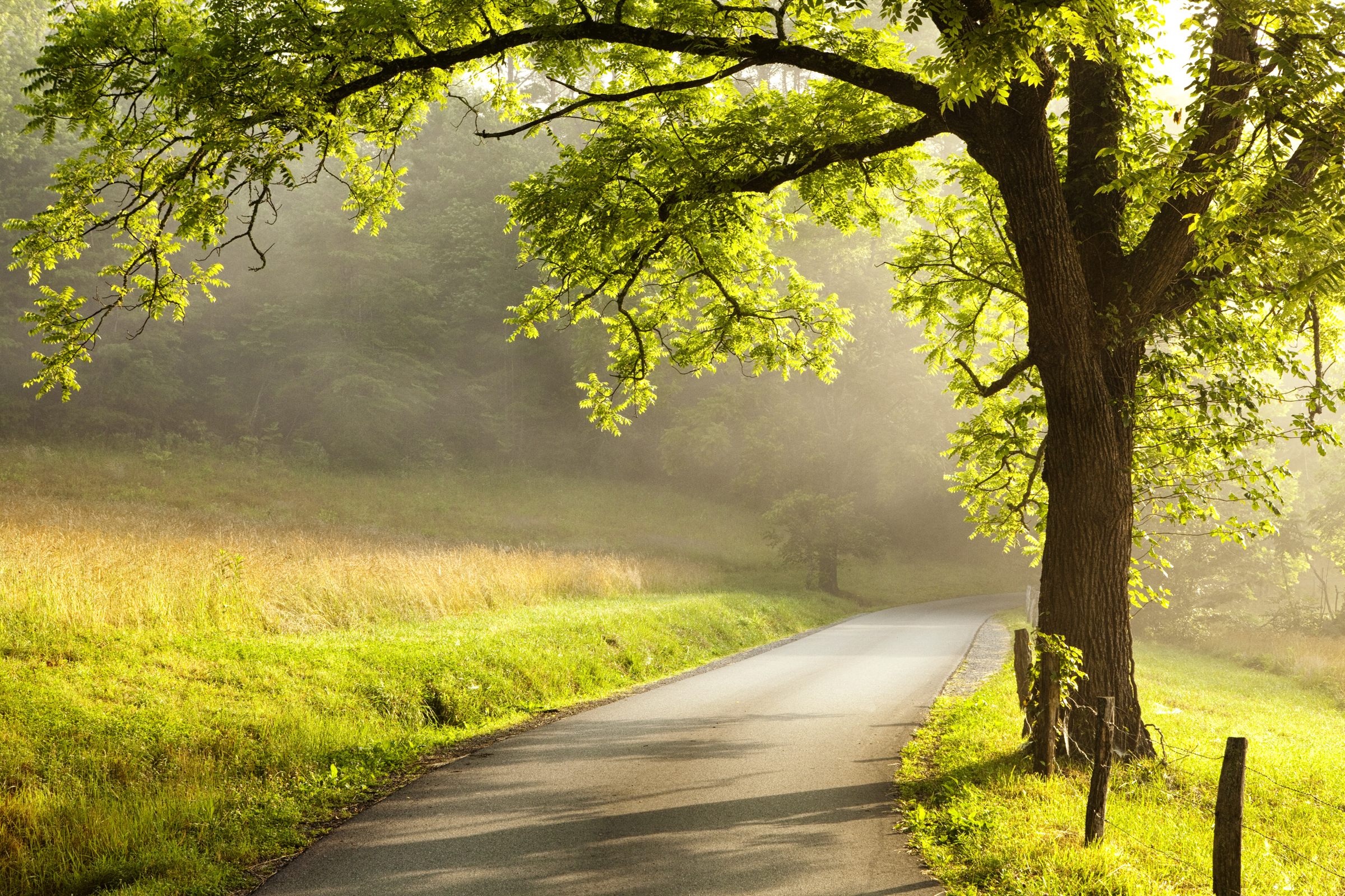 A backlit view of a country road at dawn in Cades Cove in the Great Smoky Mountains National Park.